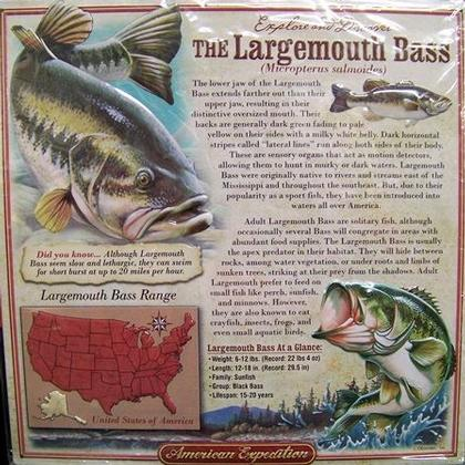 American Expedition - The Largemouth Bass