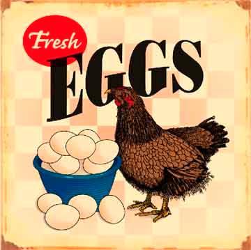 Fresh Eggs 14