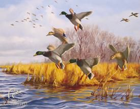 Ducks Unlimited - As Good As Home