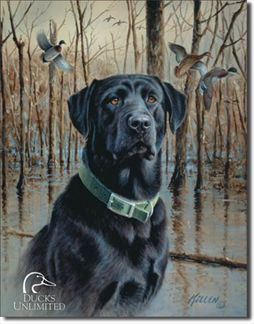Ducks Unlimited - Great Retrievers