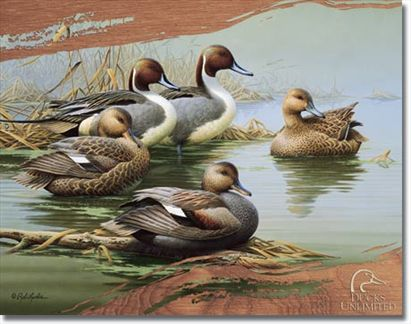 Ducks Unlimited - Morning Most